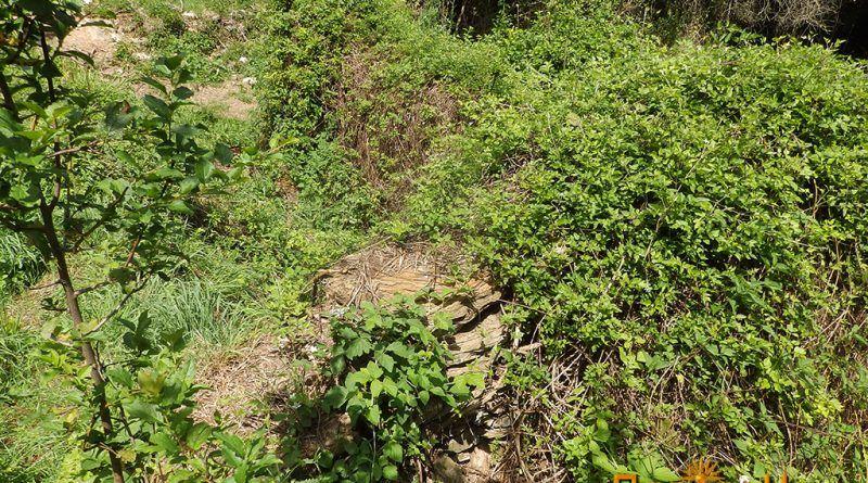 Некои од остатоците од старите градби се покриени со растенија