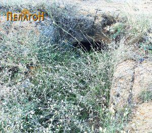 Гробница бр. 1 - дромосот и влезот обраснати во трева