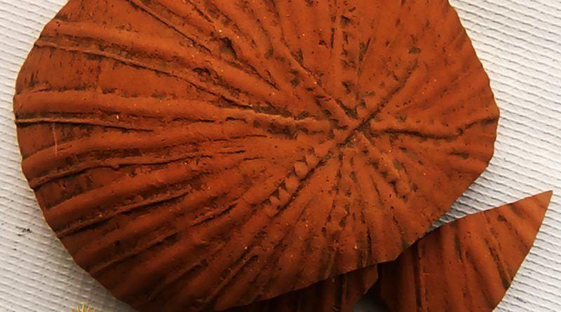 Дно од керамички сад со симбол