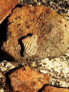 Куќен лепеж и мал фрагмент од керамички сад со украсување
