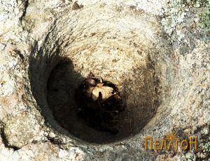 Кон усоидна јама на карпа на Кале 1