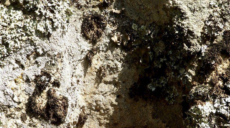 Вертикално издлабен дел во карпа на Кале 1