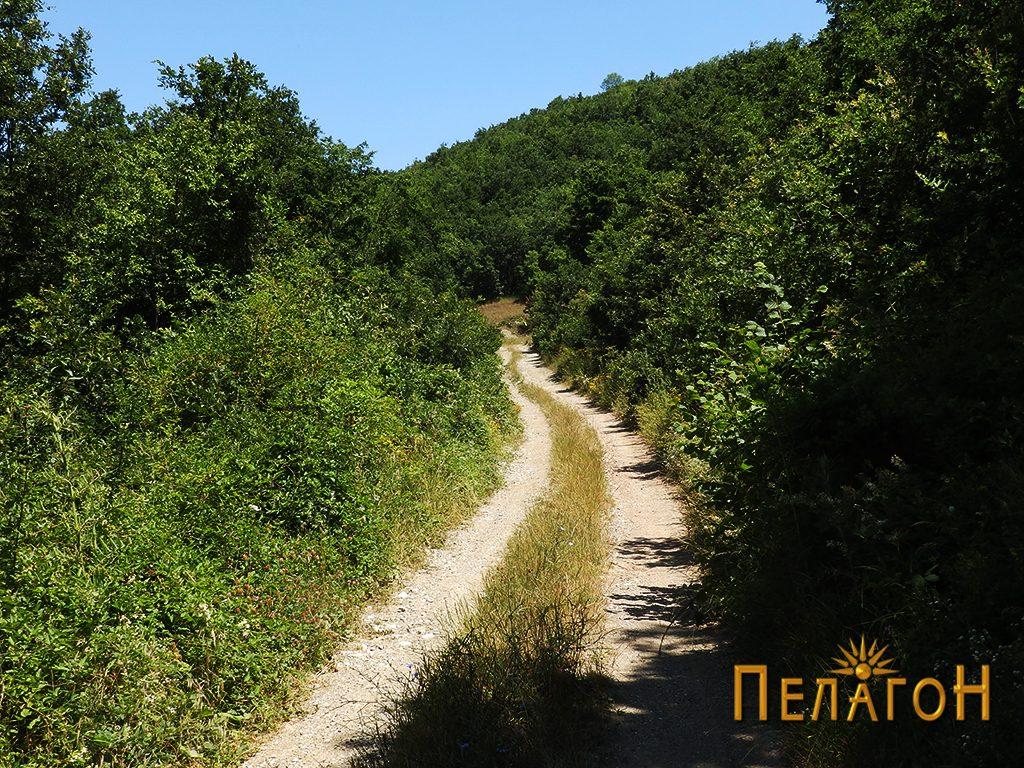 Патот кон селото Врпско