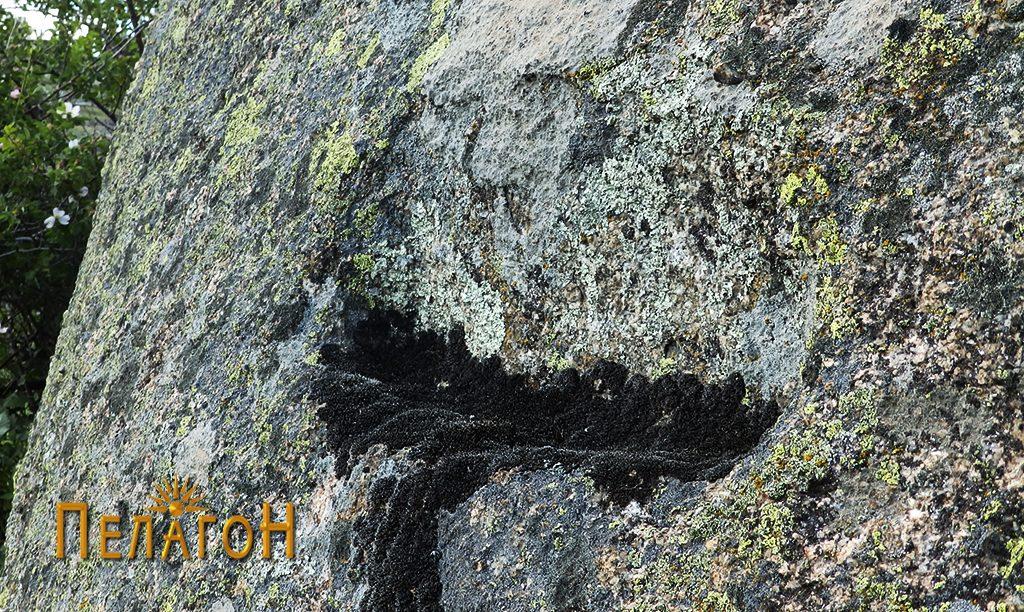 Констурктивен елемент на профил на карпа