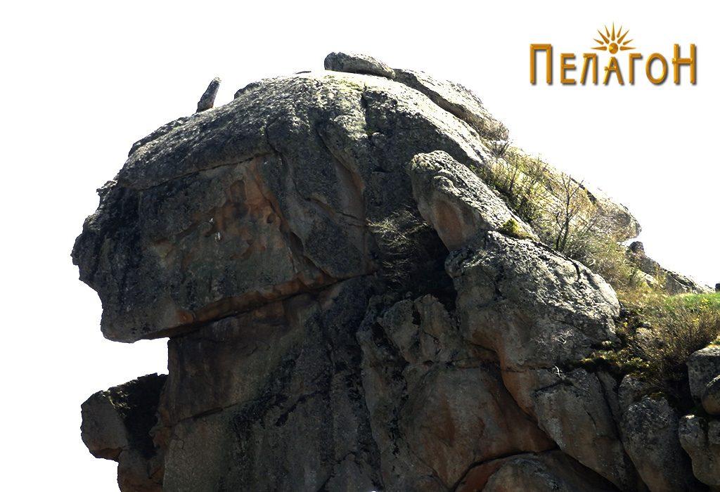 """Главата на """"Лавот"""" со """"рог"""" 2"""