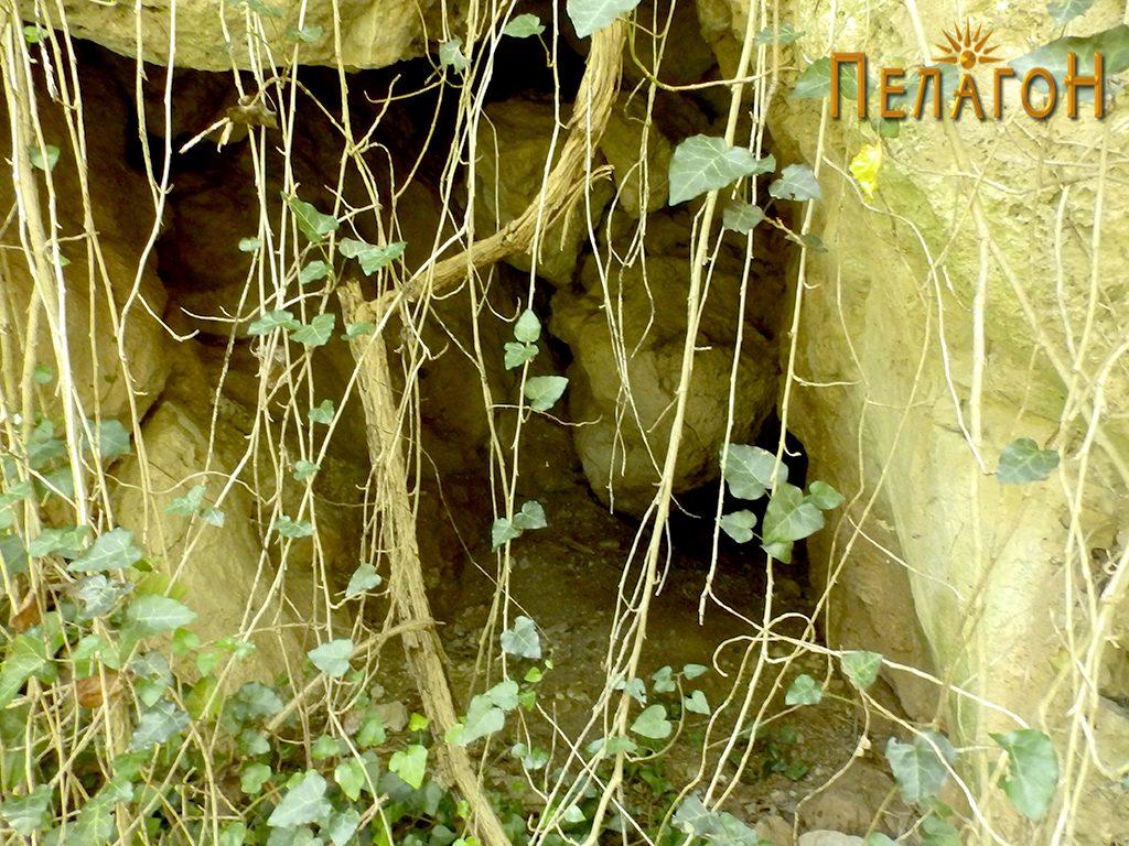 Мала пештера маскирана со растенија покрај Црна Река