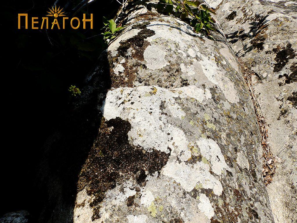 Скалеста форма на карпа