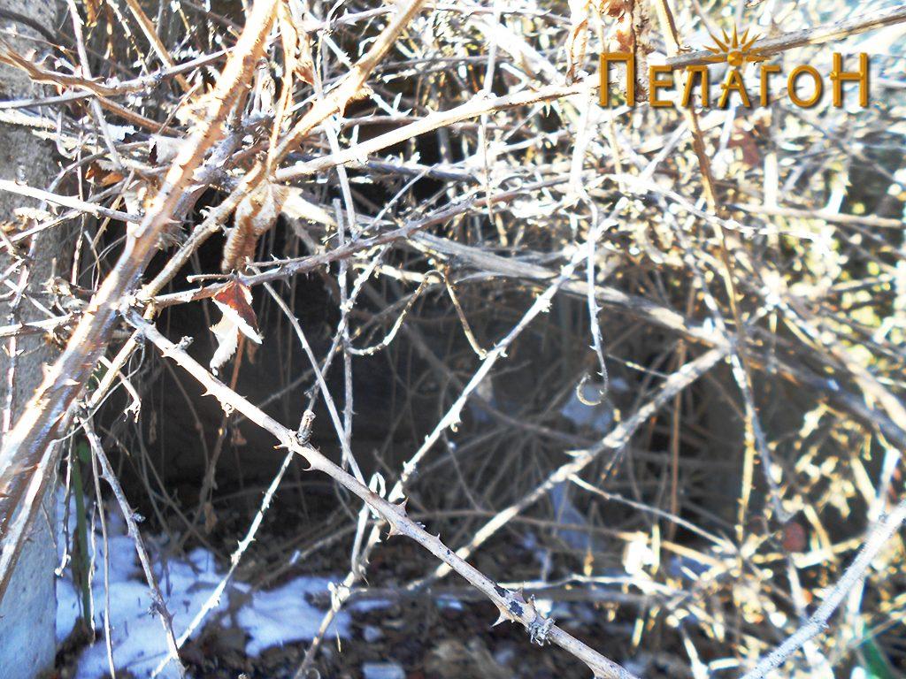 Гробницата од македонски тип скриена во капини