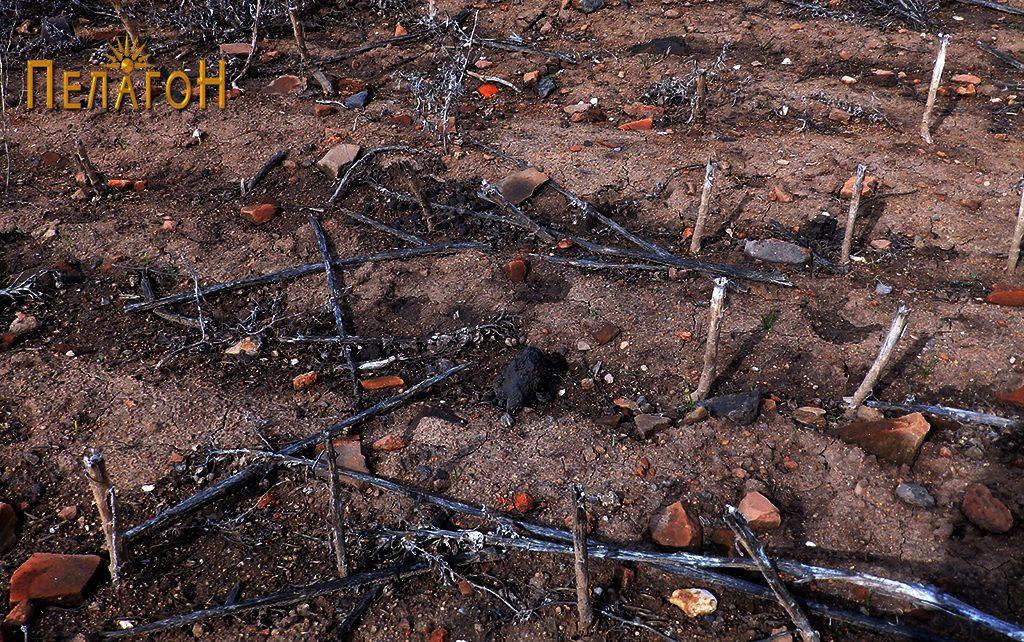 По површината на локалитетот - фрагменти од керамички садови на секој чекор