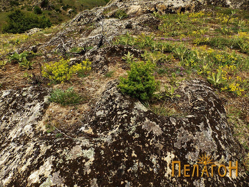 Гробови издлабени во карпа од некрополата 2