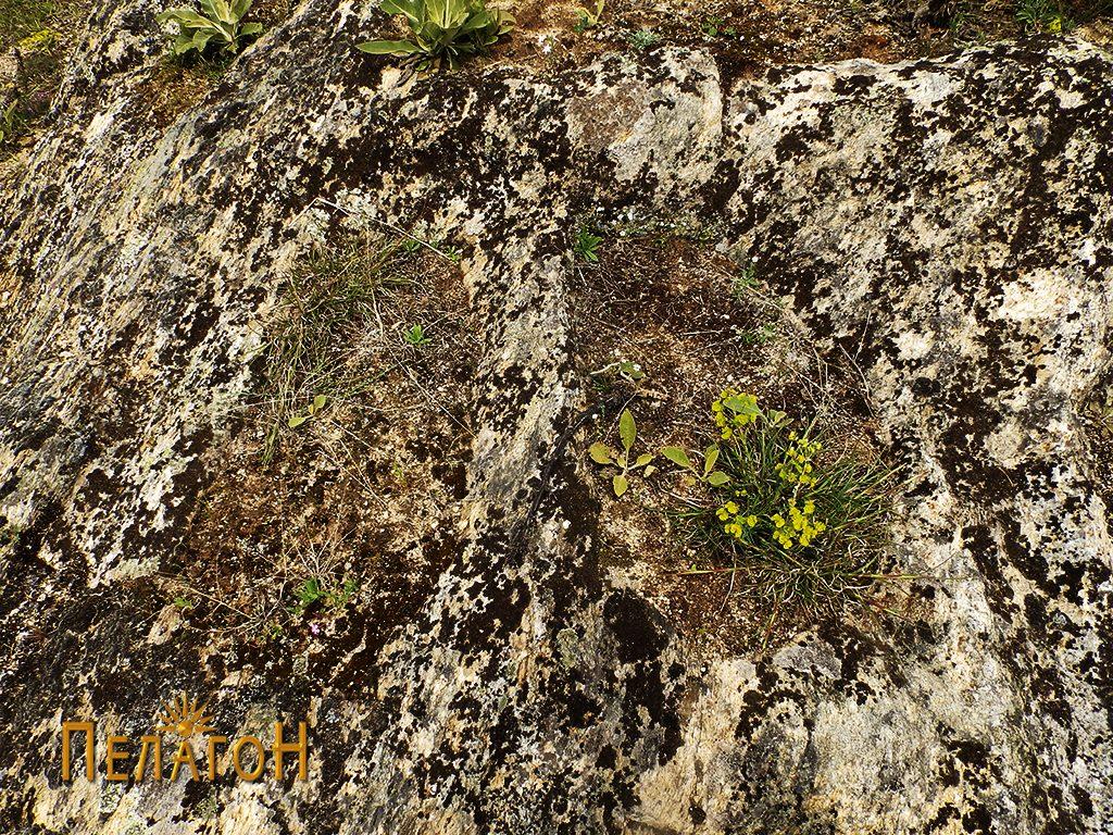 Гробови издлабени во карпа од некрополата 3
