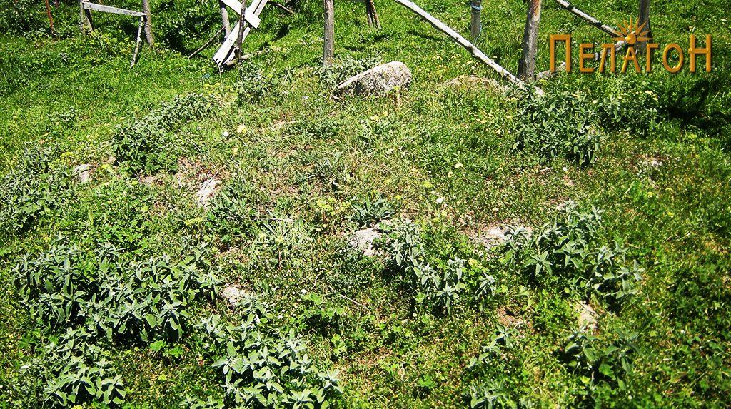 Остатоци од могилата денес 7