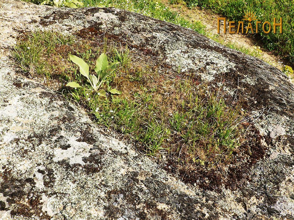 Еден од гробовите во карпа во близината