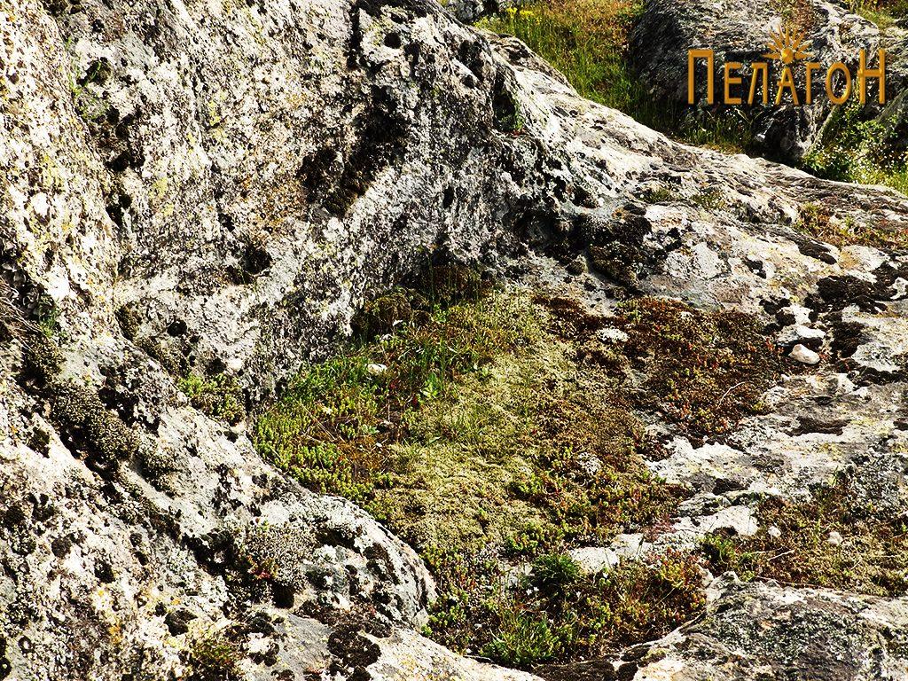 Поголем правоаголно обработен дел во карпа во близина