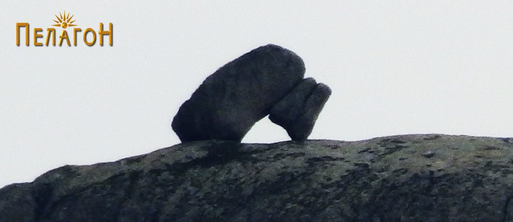 Карпата - мечка од север