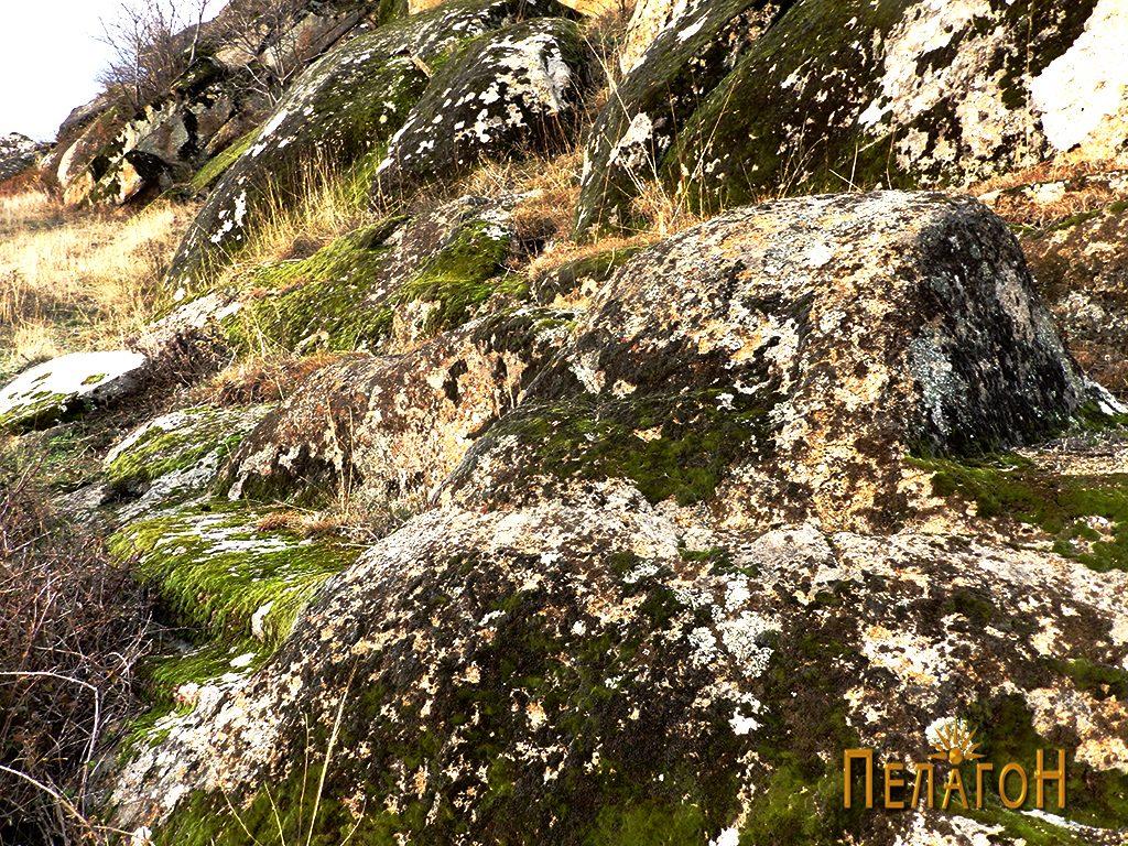 """Скалести форми по карпите од северната страна на """"Рамниште"""" 3"""