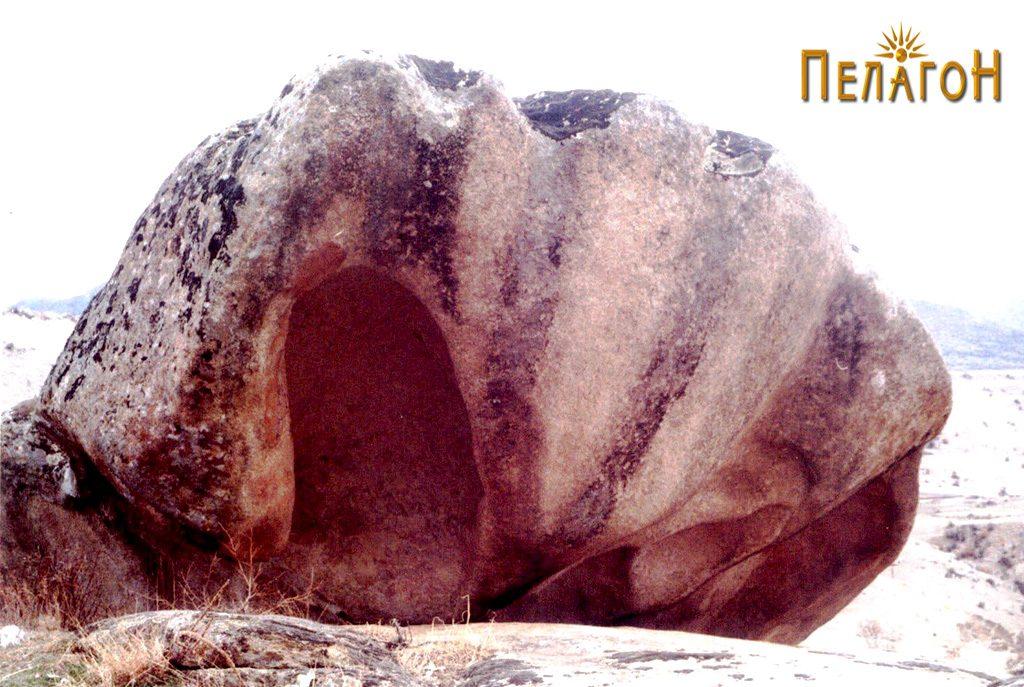 Карпата школка со голема ниша на левата половина 2
