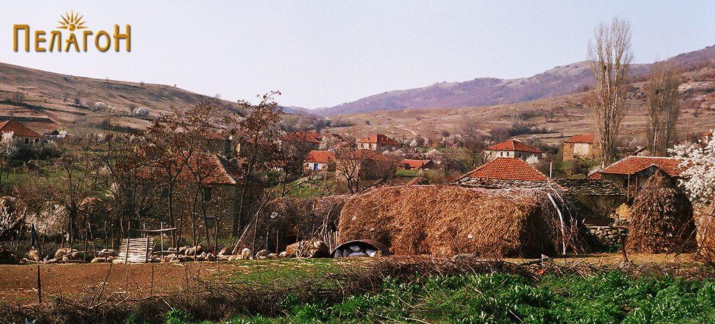 Крушевица со трло во преден план